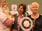 Best In Show winner with his owner Sharon Saville (centre) and Show Manager Ronnie Brooks.